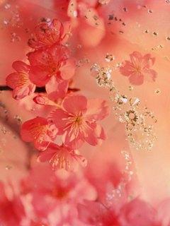 Нежно-розовые обои украсят дисплеи телефонов прекрасной половины человечества